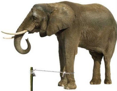 the elephant's rope / Story